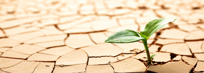 Los 6 hábitos para desarrollar tu resiliencia
