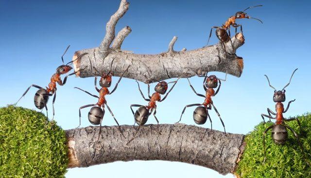 Cooperación: trabajar juntos para ganar