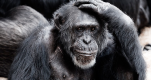 6 preguntas típicas sobre la inteligencia
