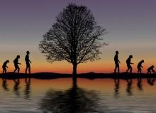 Evolución: ¿supervivencia, adaptación, suerte?